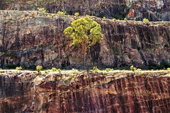 Rocks, Old Quarry Walls and a Tree!  Lake Bellfield, Victoria, Australia (Red Nomad OZ) Tags: grampians lakebellfield victoria australia grampiansnationalpark