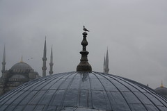 Rooftops.... (lazy south's travels) Tags: istanbul turkey turkish aya sophia islam islamic christian urban building architecture bird seagull rain wet dull winter museum sultanahmet square