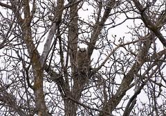 Bois Des Esprits Trail (Valery_RW) Tags: bois des esprits trail owl winnipeg