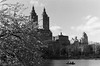the start of warm weather in New York through a vintage lens (NYC Macroscopist) Tags: spring cherryblossom nyc 50mm film bw vintage blackandwhite centralpark clouds lake analog skyline