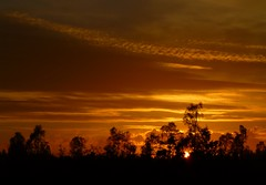 Sun setting..x (Lisa@Lethen) Tags: weather sunset skies outdoor orange cloud sun trees nature silhouette