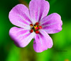 purple morning (andreea_mihailiuc) Tags: macro nature colors abstract photography photoshop cc best may spring morning relaxing flower floral purple day light green andreeamihailiuc nikon nikond3200 nikonphotography 40mmf28