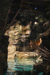 Indoor Waterfall (Adventurer Dustin Holmes) Tags: 2018 wondersofwildlife waterfall indoorwaterfall springfieldmo springfieldmissouri ozarks touristattraction touristattractions aquarium freshwateraquarium