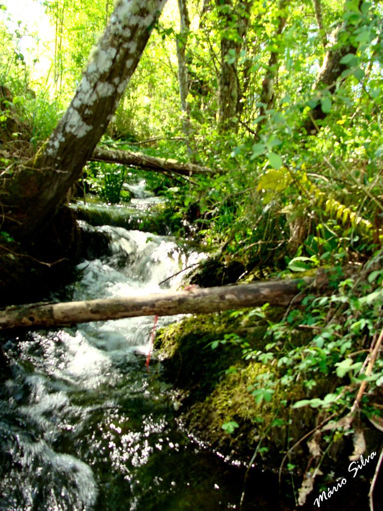 Águas Frias (Chaves) - ... e a água do ribeiro corre, saltitando, vertiginosamente por entre a verdejante vegetação ...