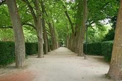 Via verde (Helderlopesfotos) Tags: lisboa caldas da rainha natureza green tree