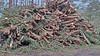20180331_172417 (wos---art) Tags: bildschichten schneebruch sturmbruch äste bäume aufräumen haufen