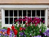 Window Horizon (Robert Cowlishaw (Mertonian)) Tags: green beauty beautiful lunchwalk horizon robertcowlishaw canonpowershotg1xmarkiii markiii g1x powershot canon red purple mertonian spring window