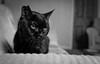 2018_112 (Chilanga Cement) Tags: bw blackandwhite monochrome cat kitty feline whiskers