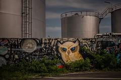 Graffiti... (hobbit68) Tags: frankfurt g graffiti industrie industriegebiet industry eule wall mauer