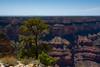 Grand Canyon (hippyczich) Tags: grandcanyon southrim arizona
