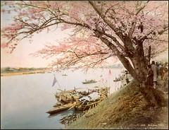 Mukojima, Tokyo (ookami_dou) Tags: vintage japan handcolored albumen mukojima 向島 tokyo cherryblossoms 桜 sakura sumida river boats ferry tree