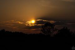 Sunset / @ DRS / 2018-04-29 (astrofreak81) Tags: sunset bird drs dresden