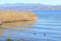 Early morning (Giovanna-la cuoca eclettica) Tags: lago lagodigarda natura