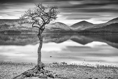 The tree at Milarrochy bay (GWMcLaughlin) Tags: 70d countryside 18135mm lomond tree trossachs hills bay mountains water loch canon eos scotland millarochy
