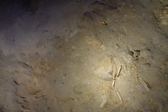 Remains of a cat (8th Century BC) (koukat) Tags: museo museum phonecian roman site artefacts cadiz archeological arqueologico romano fenicios fenicio andalucia spain espana travel drive gadir