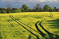 Tracks (richardheywood29) Tags: barley shadows tracks fields evening spring farming