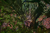 Falling Waters State Park, 1130 State Park Rd, Chipley, Florida, USA (Jorge Marco Molina) Tags: fallingwatersstatepark 1130stateparkrd chipley florida usa sinkhole nature waterfall scenic northwestflorida sunshinestate rocks geology limestone park hill campground