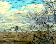 wood wind (Hilarywho) Tags: trees bark texture doubleexposure composite layered layers sky clouds woodwind