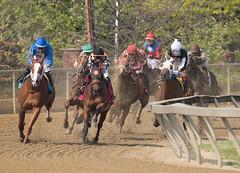 2018 Pimlico Race track (102) (maskirovka77) Tags: pimlico dirt mare race racehorse threeyearold turf yearling