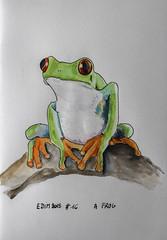 Edim2018 #16 A Frog (chando*) Tags: edim2018 croquis sketch aquarelle watercolor encre ink
