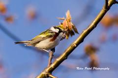 IMG_6250 (nitinpatel2) Tags: bird nature nitinpatel