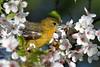 Exposed (Photos By JM) Tags: oriole birds nature highpark