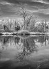 Island of the Damned! (Jay:Dee) Tags: 2018topwrs toronto island cherry blossoms topw photo walks walk bw black white infrared reflection water