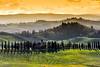 Following the cypresses way (SLpixeLS) Tags: italy italie tuscany toscane toscana chiusure cypress cyprès panorama pano bestcapturesaoi