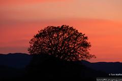DSC_8421.jpg (tmaffitt) Tags: charlotte 2018 vermont lakeroad sunset silhouette