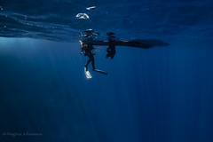 dive@isla.clarion ([MJ]) Tags: isla clarion