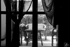 (Gi_shi) Tags: nikon iamnikon nikonfm2 nikonitalia film analogica analogic bn bnw biancoenero bw kodak trix400