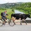 A Man and his Cow (owilybug) Tags: man cow moldova travel travelphotography canon canon5d rural bicycle river easterneurope wanderlust