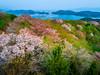 PhoTones Works #10104 (TAKUMA KIMURA) Tags: photones takuma kimura 木村 琢磨 風景 景色 自然 landscape nature snap dji phantom4pro drone 桜 cherry cherryblossom 山 mountain