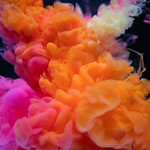Abstract orange and pink color drop to the water thumbnail