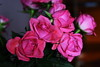 DSC_9148 (PeaTJay) Tags: nikond750 sigma reading lowerearley berkshire macro micro closeups gardens indoors nature flora fauna plants flowers bouquet rose roses rosebuds