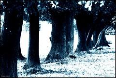 Saint Germain d'Arcé (Sarthe) (gondardphilippe) Tags: saintgermaindarcé sarthe maine paysdelaloire loir leloir monochrone arbre arbres tree trees bleu blue campagne champ couleurs colors field extérieur outdoor landscape paysage monochrome nature ombre quiet rural ruralité texture zen