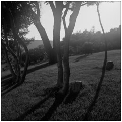 Morning Sun (Koprek) Tags: yashicamat124g fomapan 100 novalja croatia film 6x6 boskinac morning sun