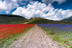 Castelluccio di Norcia (--marcello--) Tags: castellucciodinorcia umbria italy landscape paesaggio longexposure lungaesposizione nature natura fioritura fiori flowers colors city citylandscape mountains upland nikon nikond750 sky clouds