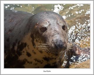 Seal Snap