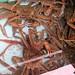 Bering Sea Crab Fishermen's Tour 5g