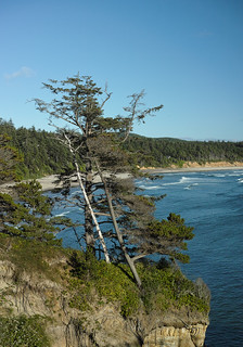 Windswept trees on the cliff