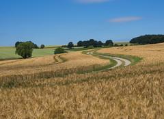 S-Kurven (Teelicht) Tags: deutschland feld fuldaradweg germany hessen radtourwasserkuppebraunschweig field biketrip getreide cereals bicycletrip