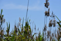 Intentando pillarla al vuelo (esta_ahi) Tags: deltadelllobregat libélula libèllula dragonfly anisoptera odonata insectos fauna viladecans baixllobregat barcelona spain españa испания