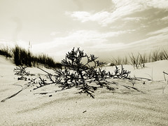 mood (Darek Drapala) Tags: mood closeup sand beach beauty nature natural baltic sea seashore seascape sepia panasonic poland polska panasonicg5 lumix light