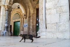 Jerusalem old city (pankazek_foto) Tags: oldcity israel jerusalem templemount alaqsamosque alaqsa mosque cat