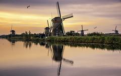 Kinderdijk Windmill (grbenson3) Tags: kinderdijk neatherlands windmills zuidholland netherlands nl sunrise reflection birds