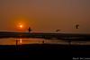 show your wings (wardkeijzer_107) Tags: zeeland schouwenduiveland natuurmonumenten oosterschelde sunset zonsondergang evening avond natuurgebied nature reserve