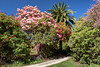 Lovely Blue Skys (Jocey K) Tags: newzealand nikond750 southisland christchurch gardens trees plants sky shadows lawn ilamgardens rhododendrons bluebells flowers palm pathway