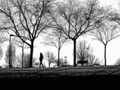 Siluetas (Lea Ruiz Donoso) Tags: anochecer arboles bosque forest naturaleza paisaje spain españa madrid luz sombra contraluuz siluetas monocromo bn bw learuizdonoso learuizdonosophotography