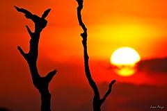 Sunset at Macapá, Amapá, Brazil. (Juan Anza) Tags: naturewatcher naturelover naturepics natureza nature natural brazil sunset sky sun sunrise